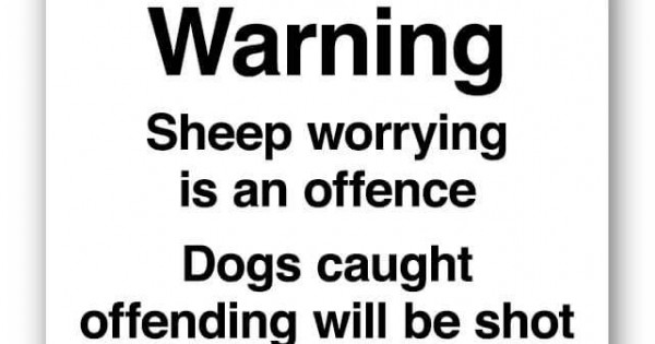 Sheep Worrying Signs Farm Signs